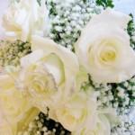 gelinin-çiçeği (6)